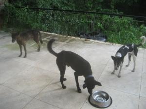 IMG_1695 Våra gamla tre hundar